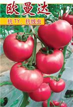 欧曼达――番茄种苗