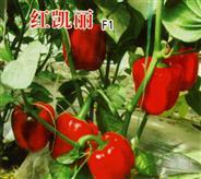 红凯丽F1――甜椒种苗